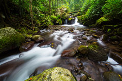 Forest River Stream Royalty Free Stock Photo