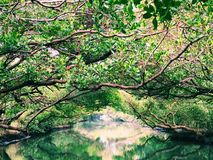 Forest and river. Take the photo in Tainan green tunnel Royalty Free Stock Image