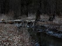 Forest river at twilight Royalty Free Stock Photography