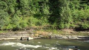 Forest River vatten, ström, natur