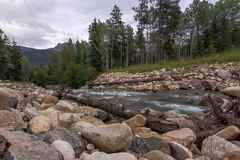 Forest river Royalty Free Stock Images