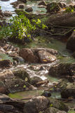 Forest river waterfall stones Stock Photography