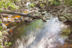 Forest river waterfall stones Stock Photos