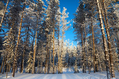 Forest river in winter day Stock Photography