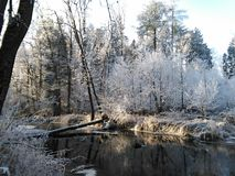 Forest river in winter. In the Czech Republic stock photo