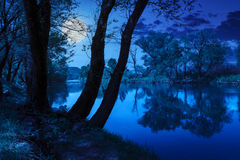 Forest River With Stones And Grass At Night Stock Image
