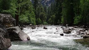 Forest river in Yosemite stock video footage
