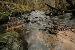 Forest rivulet in autumn with long exposure Stock Image