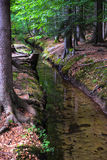 Forest rivulet Stock Photography