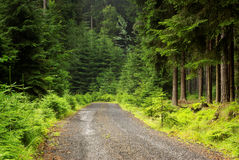 Forest road. Morning view of forest road Stock Photo