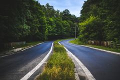 The forest road Stock Image