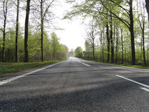 Forest road. A road running through a danish forest in spring Stock Photo