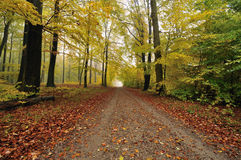 Forest road. Autumn in the forest a foggy day Royalty Free Stock Image