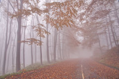 Forest road. In Stara Planina mountain in Bugaria stock images