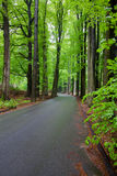 Forest road. A forest road during spring Stock Photos