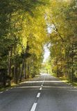 Forest road. European rural road through forest Royalty Free Stock Image