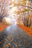 Forest road. Autumn forest road in the woods Royalty Free Stock Image