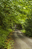 Forest Road Royalty Free Stock Photos