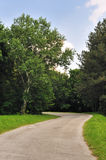 Forest road. Road winding through green field in forest. Sunny day Stock Image