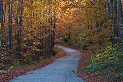 Forest road. Road through an autumn forest stock photo