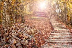 Forest road. Road through an autumn forest royalty free stock photography