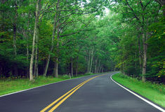 Forest Road. Highway with two lanes and trees Stock Photo