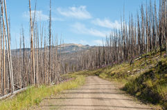 Forest road. A dirt road runs through a burnt out forest Stock Photography