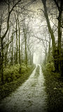 Forest Road. Vintage-effect mobile phone image of a country road leading through a dark green- tinted misty forest