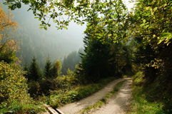 Free Forest  Road Royalty Free Stock Images - 30369889