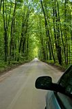 Forest road. A wet forest road in tiny beach royalty free stock photo