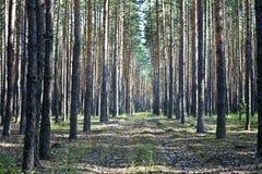 Forest Road Fotos de archivo libres de regalías