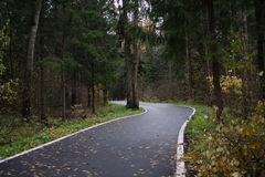 Forest Road. Forest Weaving Asphalt Road Turns Left Stock Photos