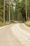 Forest road Royalty Free Stock Photo