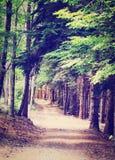 Forest Road Foto de archivo libre de regalías