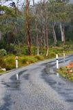 Forest Road Royaltyfri Bild