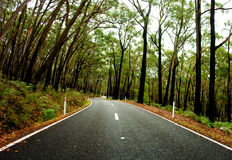 Forest Road Royalty Free Stock Image