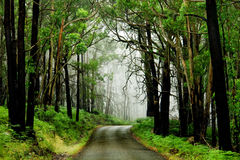 Free Forest Road Stock Image - 4696851