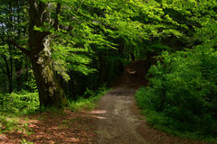 Free Forest Road Stock Photography - 51493572