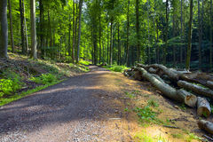 Free Forest Road Royalty Free Stock Image - 53398726