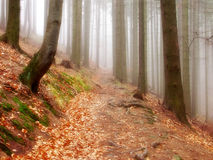 FOREST ROAD. Fog road in autumn forest Stock Photo