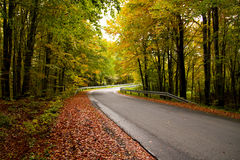 Forest road. Mountain road during the fall Royalty Free Stock Photos