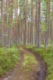 Forest road around pine trees and moss Stock Photo