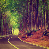 Forest Road. Aspalt Forest Road in Italy, Instagram Effect Royalty Free Stock Image