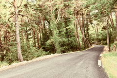 Forest Road Stock Images