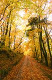 Forest road in autumn Royalty Free Stock Images