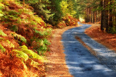 Forest road in autumn. Forest road in Rodopi mountain in Bugaria stock photo