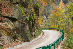 Forest and road in autumn Stock Photography