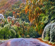 Forest road in autumn. Forest road in Stara Planina mountain Stock Image