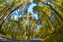 Forest road in autumn - Fisheye view Royalty Free Stock Images