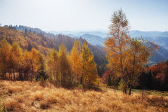 Forest Road in the autumn.  Landscape. Carpathian. Ukraine Europe Royalty Free Stock Photo